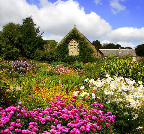 Colourful flowers in Cornish gardens